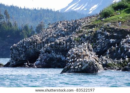 Gull Rock covered with Seagulls near Homer Alaska - stock photo