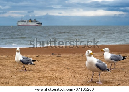 Gull team traveling on sandy beach. There is a boat, shipping on the sea