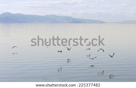 Gulls flying over the Great Salt Lake, Antelope Island State Park in Salt Lake City, Utah