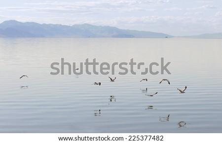 Gulls flying over the Great Salt Lake, Antelope Island State Park in Salt Lake City, Utah - stock photo