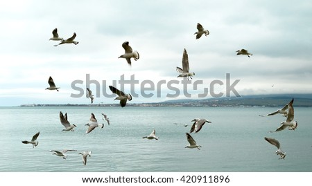 gulls on the water, seascape