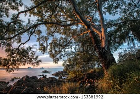 Gumtree - stock photo