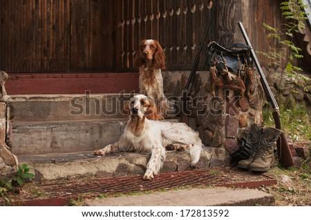 Gun dog near to shot-gun and trophies, horizontal, outdoors - stock photo