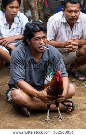GUNUNG SALAk, INDONESIA - DECEMBER 26, 2015: Balinese villager holds a gamecock before a cockfight.