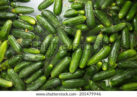 gurtsov conservation. Fresh cucumbers in jars - stock photo