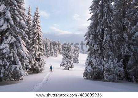 Guy walking in snowshoes in the spruce forest. Winter landscape with trees in the snow