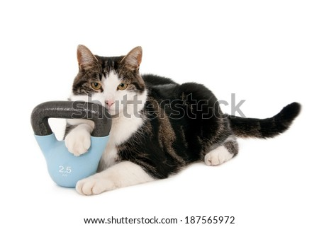 Gym cat with kettlebell, isolated on white  - stock photo