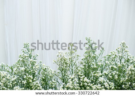 Gypsophila (Baby's-breath flowers), light, airy masses of small white flowers in front of white backdrop - stock photo