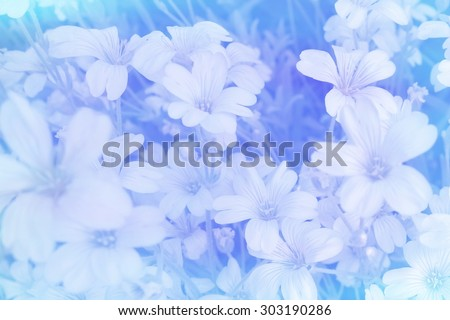 Gypsophila flower azure blue smudge blurred delicate pale soft romantic floral abstract background