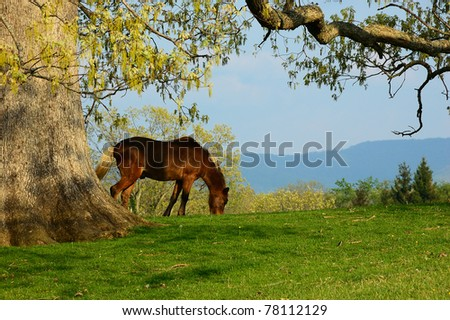 Hackney Horse, family farm, Webster County, West Virginia, USA - stock photo