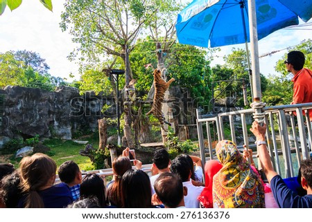 Had-Yai, Thailand - June 5, 2015 Unidentified peoples are looking a feeder feeding tiger at Open Zoo, the biggest zoo in Thailand. - stock photo