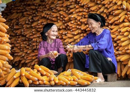 HAI DUONG, VIETNAM, February 14, 2016 two elderly, rural Hai Duong, doing housework, corn