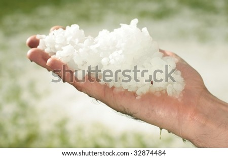 hail after storm on grass, pea sized hail fell on meadow, many hail on hand - stock photo