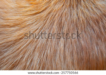 Hair animal color: It is hair of dog - stock photo
