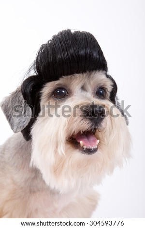 hair style, smart dog ,funny dog ,wig dog,grooming dog