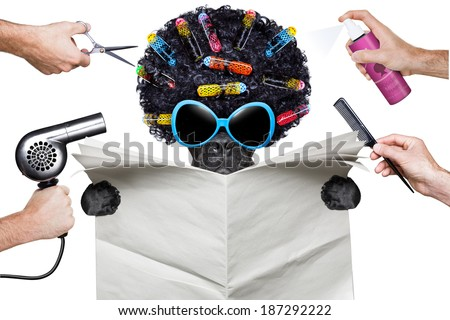 hairdresser dog holding a white blank newspaper or magazine - stock photo