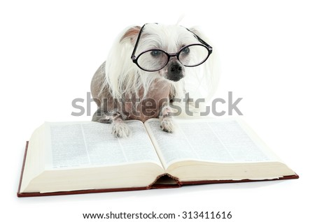 Hairless Chinese crested dog with glasses and book isolated on white - stock photo
