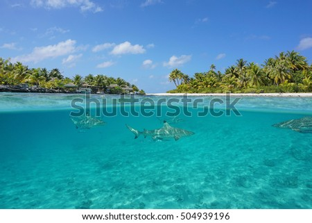 Half above and half below view of a tropical island with a vacations resort and blacktip reef sharks underwater, Tikehau atoll, Pacific ocean, French Polynesia
