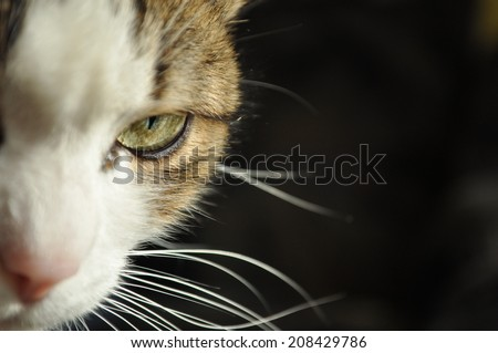 half headed cat with green eye on black background - stock photo