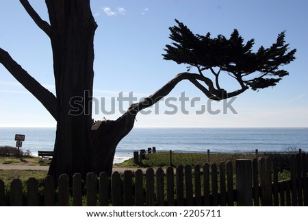 Half Moon Bay tree - stock photo