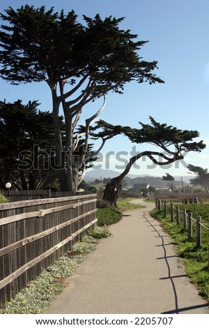 Half Moon Bay trees - stock photo