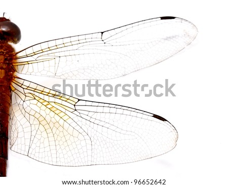 half side of a red dragonfly on white background - stock photo