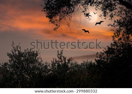 Halloween background with full moon and bats.  - stock photo