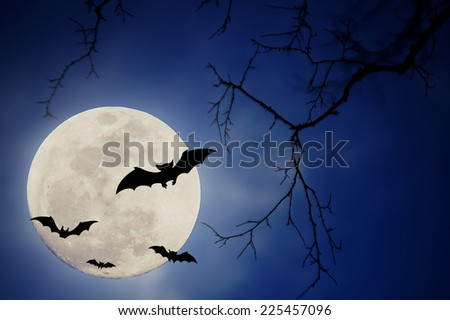 Halloween design background with , naked trees, and bats and moon - stock photo