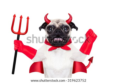 halloween devil pug dog  with red cape, isolated on white background - stock photo
