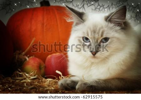 halloween kitty - stock photo