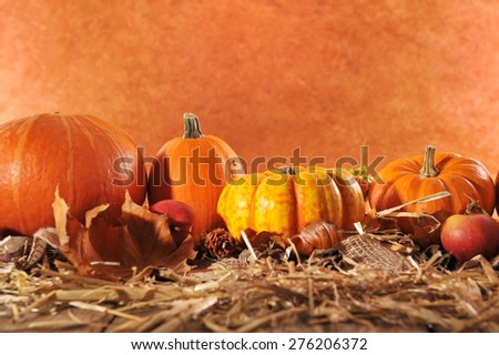 Halloween - many different pumpkins on straw in front of brown background with copyspace - stock photo