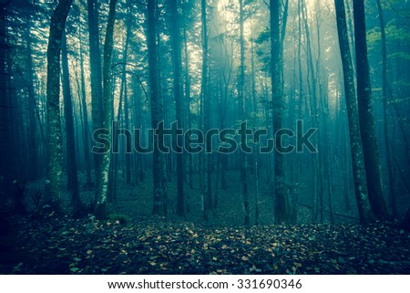 Halloween night in dark spooky forest in Tuscany, Italy. - stock photo