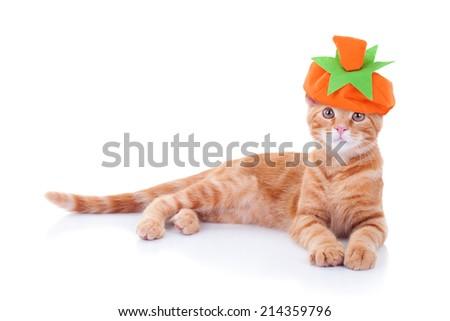 Halloween or Thanksgiving cat kitten wearing pumpkin costume isolated on white - stock photo
