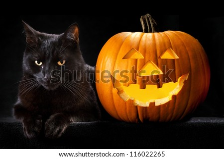 Wonderful Halloween Pumpkin Black Cat Scary Spooky Stock Photo (Edit Now)   Shutterstock