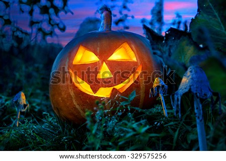 Halloween pumpkin at night in the garden between the fabulous fungi. - stock photo