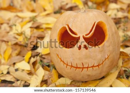 Halloween pumpkin close up on golden autumn leaves - stock photo