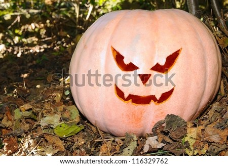 Halloween pumpkin in the forest with terror face. - stock photo