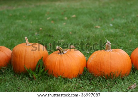 Halloween pumpkins still-life with natural background - stock photo