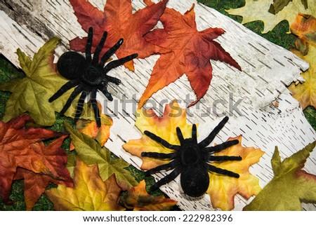 Halloween Spiders - stock photo