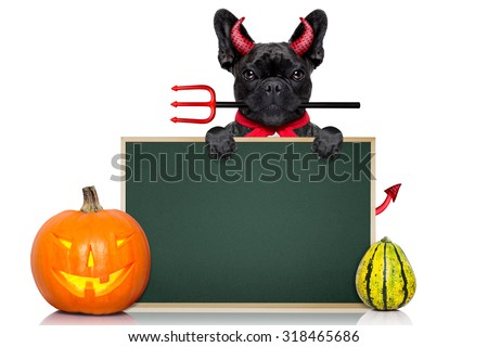 halloween  witch french bulldog  dog  dressed as a bad devil with red cape ,behind a wall ,  isolated on white background - stock photo