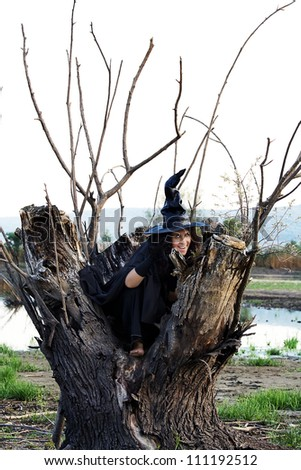 Halloween Witch hid in a hollow tree, and preparing new villainy - stock photo
