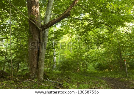 Halltorps hage, a well known habitat and nature reserve for endangered insects. The area has many old oaks, some inhabited by the rare Great capricorn beetle, Cerambyx cerdo. - stock photo