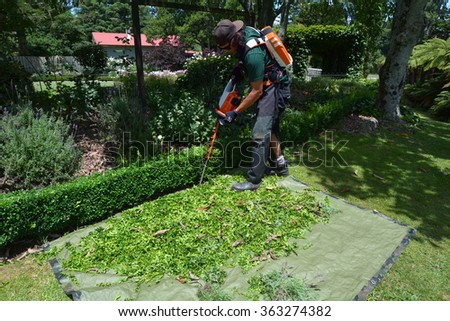 HAMILTON, NZL - JAN 15 2016: Gardener trimming plants in a garden with a trimmer.Forest gardening, a forest-based food production system, is the world's oldest form of gardening. - stock photo