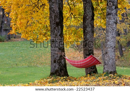 Hammock among autumn trees