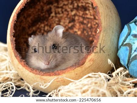 Hamster - stock photo