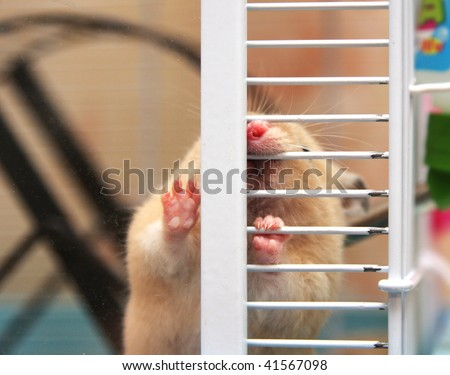 Hamster chewing cage - stock photo