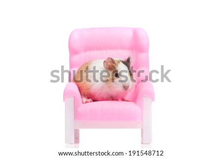 Hamster. Funny hamster sitting on armchair - stock photo