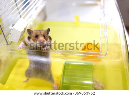 Hamster gets out of his cage - stock photo