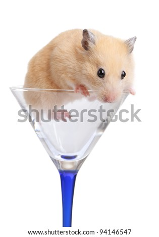 Hamster in glass isolated on white - stock photo