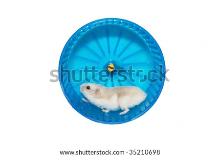 hamster in the wheel. Routine - stock photo